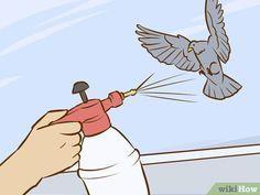 Get Rid Of Pigeons Get Rid Of Pigeons Pigeon Pigeon Deterrent