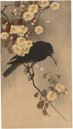 Shoson Ohara: Crow on a cherry branch - Japanese Art Open Database