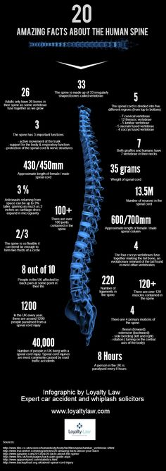 20 Amazing Facts About The Human Spine | Circle of Docs- Chiropractic Social Network