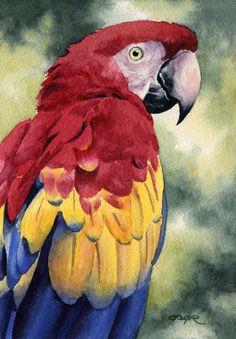 Guacamaya roja Art Print aves acuarela por DJRogersWatercolors