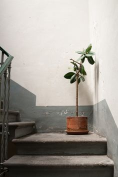 Staircase & potted plant in Roma -photograph by Helena La Petite - New Deko Sites