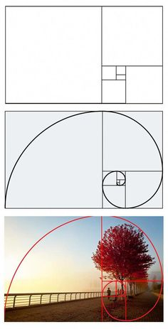 4 Web Design Tips that your Web Designer Won't Know About Golden ratio Source by palp Issues To Know About Web Design Tips Being conversant. Web Design Tutorial, Web Design Tips, Web Design Trends, Photography Basics, Photography Lessons, Art Photography, Photography Pricing, Photoshop, Technique Photo