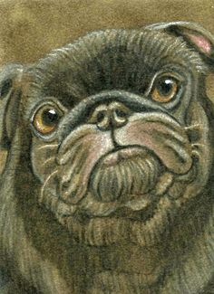 ACEO ATC Black Pug Dog Art Original Drawing on Suede-Carla Smale #Realism