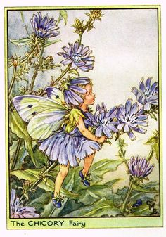 "Cicely Barker's Fairy Print - ""THE CHICORY FAIRY"" - Children's Lithogrpah - c1935"