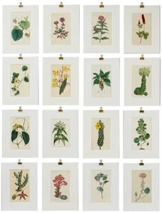 Botanical Prints Take Me Back