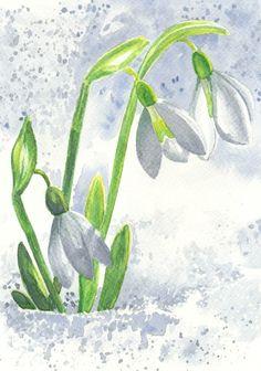 snežienky, watercolor, snowdrops, snow, flowers