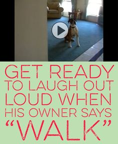 "Get ready to laugh out loud when his owner says ""walk"" :)"