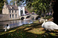 geniet van uw verblijf in Brugge! Amsterdam Netherlands, Places Ive Been, Holland, Coastal, Beautiful Places, France, Pictures, Belgium Bruges, Travel