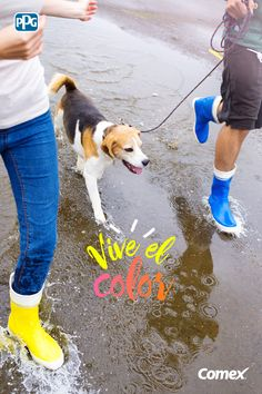 #ViveElColor de disfrutar de un paseo mañanero con tu mascota en un día lluvioso.  #Comex #ComexLATAM #Mascotas #Lluvia #Botas #Diversion #Ideas