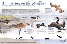 Love the illustrations. A little heavy on the text at the top but like the flow and comparison of the birds and their adaptations.