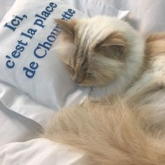 c2a6c848dc8d Who's one of the richest kitties in the world? It's Choupette, the feline  muse of the late fashion designer Karl Lagerfeld.