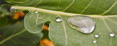 Fresh raindrops.