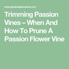 Trimming Passion Vines – When And How To Prune A Passion Flower Vine