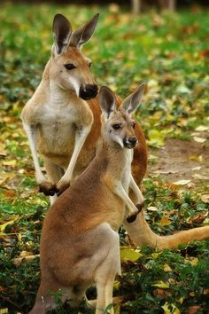 I can't wait to go to Australia and study them in 3years:)