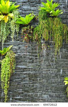 Stone Wall And Plants Water Garden Asplenium Nidus