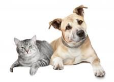 The Dog Trainer : How to Keep Your Dog From Chasing Cats :: Quick and Dirty Tips ™