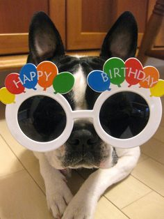 ♥KK♥ 35 FRENCHIE IS LOOKING AT YOU THROUGH BIRTHDAY GLASSES