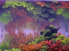 120 Gallonen Holländer etwas oder eine andere Gepflanzt - Aquarium Pflanzen…