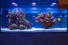 Patch reef aquarium.                                                                                                                                                                                 More