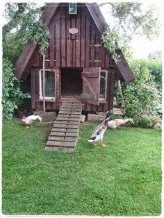how to build a duck house for winter