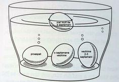 Vezi cum îți dai seama dacă ouăle provin de la găini bolnave si cat sunt de proaspete – Vouch.ro