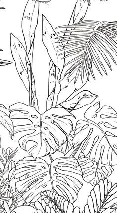 Jungle Tropical Black & White Wallpaper for Ohmywall created by the Caddous & Alvarez artists duo in the spirit of a mural. Their drawings, imagined and traced to four . Nature Drawing, Plant Drawing, Wall Drawing, Art Drawings, Jungle Drawing, Tropical Wallpaper, Nature Wallpaper, Jungle Wallpaper, Mural Art