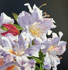 Amber Emm Artworks Available At Black Door Gallery. Photo realistic floral oil paintings with strong contrasting light, depicting the beauty that can be found in our own backyard. Black Doors, Amber, Illustration Art, Gallery, Artwork, Flowers, Plants, Painting, Art Work