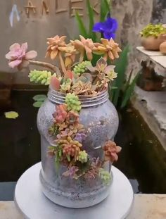 House Plants Decor, Plant Decor, Cacti And Succulents, Planting Succulents, Cactus Plants, Hanging Plants, Indoor Plants, Indoor Herbs, Air Plants