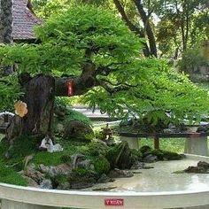 857 Likes, 6 Comments - kayseri bonsai /TURKEY (@kayseribonsai) on Instagram