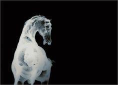 lens culture: David Maisel, History's Shadow