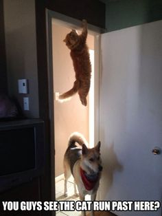 Mission Impossible theme song playing…