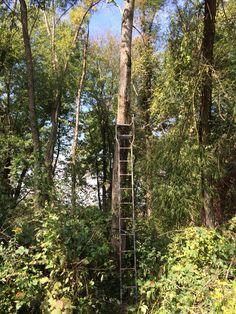 13 Best Timbertall Treestands Images Climbing Tree