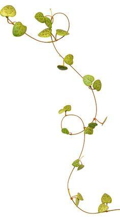 Tube Plants – Graffiti World Flower Frame, Flower Art, Watercolor Flowers, Watercolor Art, Vine Drawing, Flower Pattern Drawing, Vine Tattoos, Flowery Wallpaper, Watercolor Painting Techniques