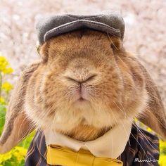 Stylish Bunny