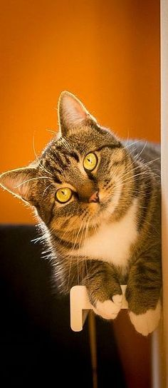 💙💖💛 beautiful cat 💙💖💛   #by  Robert Musiol on 500px.com