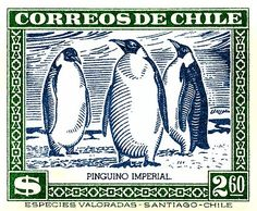 Antique 1948 postage stamp issued by Chile depicting native Emperor Penguins (Aptenodytes forsteri). emperor penguin,patagonia,chile,chilean,fauna,species,antique,postage stamp,naturalist,mail,ephemera,philately,natural history,1948,antarctica