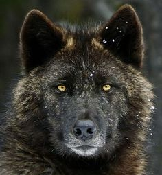 The place where wolves could soon return - Care2 News Network