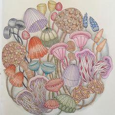 Wild Mushroom Patch  Tropical World  Millie Marotta #milliemarotta #tropicalworldcoloringbook @milliemarotta by mrsjennyg