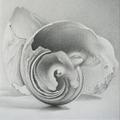 Moon Shell #1 by Whitney River - 4 inches by 4 inches - graphite on paper, 2008
