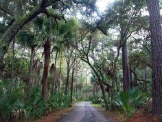 Hunting Island State Park, SC.  Just amazing.