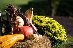 Fall Haybale Flowers Gourds - Ed Stephens