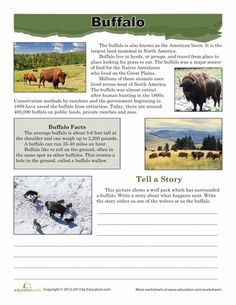 Worksheets: Buffalo Facts