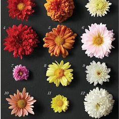 How to Grow Hardy Mums Best Perennials, Hardy Perennials, Flowers Perennials, Perennial Geranium, Cranesbill Geranium, Perennial Plant, Shade Flowers, Lavender Flowers, Fall Flowers