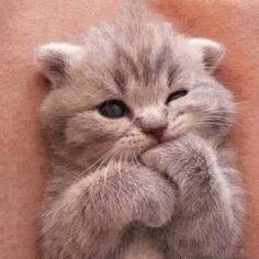 Warning Cuteness Overload!