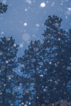 https://flic.kr/p/RJ896M | 20170131-Snowy pines. | #SouthDakota #POTD #Day1858 #snow #pine #BlackHills