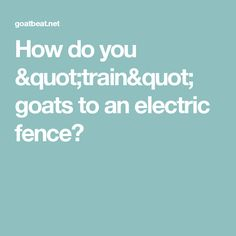 "How do you ""train"" goats to an electric fence?"
