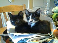 Pip is het katje en Pino is het katertje.        Ze zoeken even een eigen plekje tussen de post.