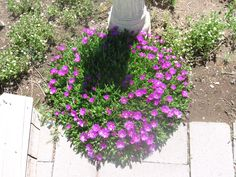 Ice Plant...these do great in our hard to grow Central Oregon soils...I also have ones that have yellow flowers