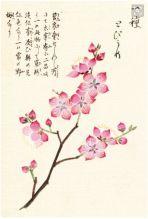 Screen Shot 2016-02-16 at 16.31.34 Cherry Blossom Watercolor, Cherry Blossom Petals, Pink Art, Skull Tattoos, Canvas Prints, Art Prints, Artist Canvas, Paper Design, Screen Shot