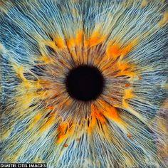 macro shot of eye, iris and pupil crop